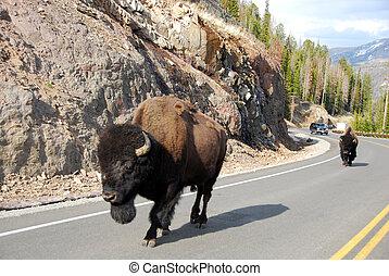 Bison Traffic 2