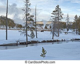 Bison, Upper Geyser Basin, Winter, Yellowstone NP - Bison at...