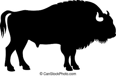 Bison, shade picture