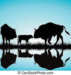 bisons, famiglia