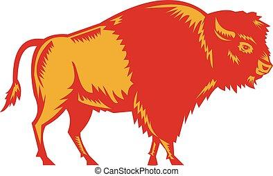 bisonte americano, lato, woodcut