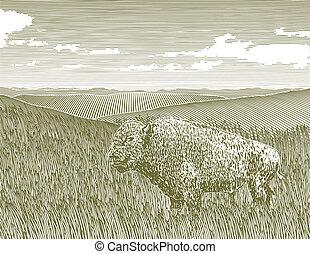 bisonte, scena, woodcut