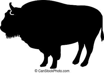 bisonte, silhouette