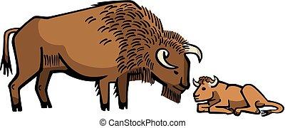bisonte, vitello