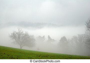 bitófák, alatt, a, köd
