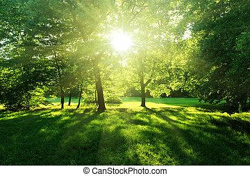 bitófák, alatt, egy, nyár, erdő