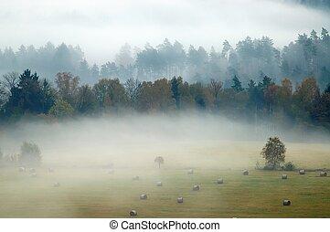 bitófák, alatt, köd
