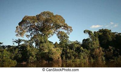 bitófák, alatt, rainforest, amazon