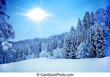 bitófák, befedett, noha, hoarfrost., gyönyörű, tél parkosít,...