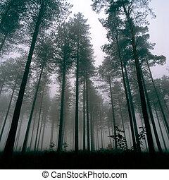 bitófák, thetford, erdő