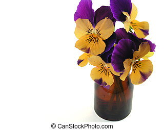 Purple and orange pansies (Viola x wittrockiana botanical name) in a 2 inch vase. Left two pansies in focus, left side of photo open for copy.