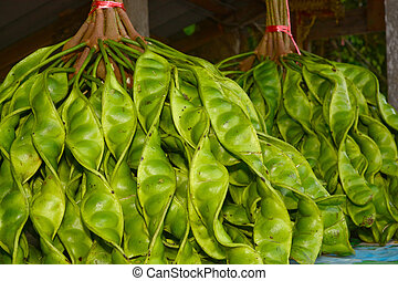 Bitter bean (Parkia speciosa) - Fresh bunch of Parkia ...