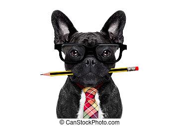 biurowy pracownik, pies