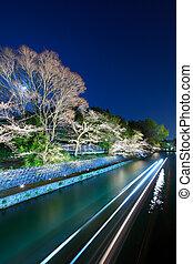 Biwa lake canal with sakura tree at night