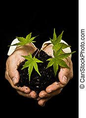 biznesmen, roślina, nowy