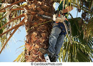 biztonság bekapcsol, helyett, fa, trimmer.