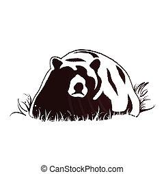 björn, och, wildlife