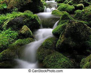 bjerg stream