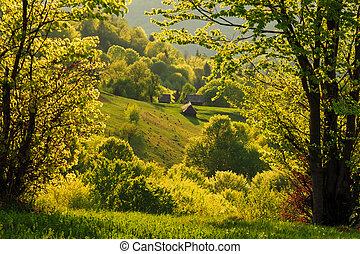 bjerge, aftenen, guld, forår, carpathian, landskab