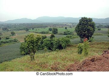 bjerge, grønnes skov, landskab