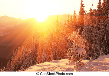 bjerge, vinter