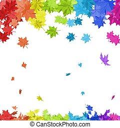 blätter, ahorn, regenbogen