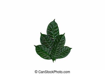 blätter, freigestellt, hintergrund., busch, grün weiß