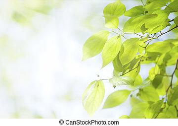 blätter, grün, sonnenlicht, unter