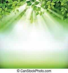 blätter, grün
