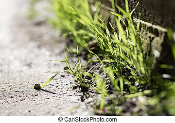 blätter, gras, stein