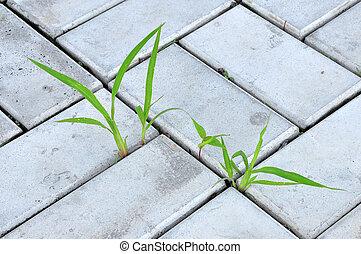 blätter grases