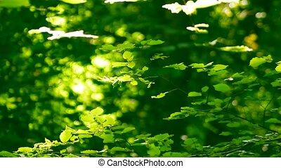 blätter, sonnig, hell, bäume, tag