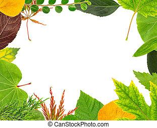 Herbarium Blätter blätter herbarium trocken herbst geht zweige stockfotografie