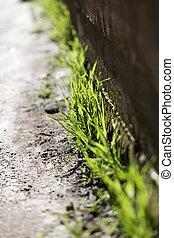 blätter, von, gras, in, stein