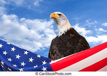blå, ørn, himmel, amerikansk. flag, baggrund, grænse