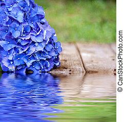 blå blomma, med, reflexion, in, vatten