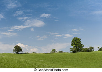 blå, clou, eng, grønne, natur