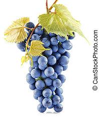 blå, druva, frukter, med, bladen, isolerat, vita