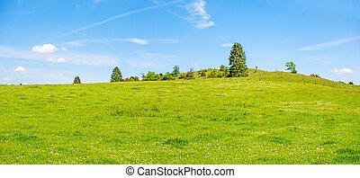 blå, eng, himmel, træer, grønnes høj