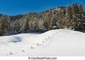 blå, eng, snedækkede, himmel, sne, træer, skov