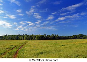 blå, fält, över, sky