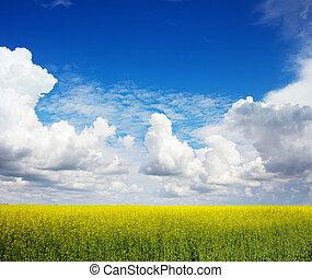 blå, fält, blomningen, sky, våldta