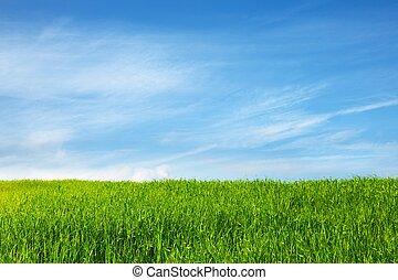 blå, felt græs, himmel