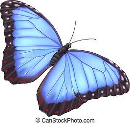 blå, fjäril, morpho