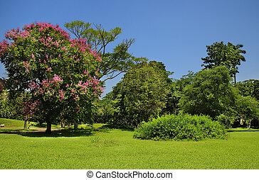 blå grønnes, himmel, træer, under