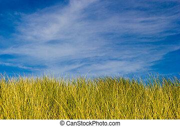 blå, gyllene, gräs, sky, grön