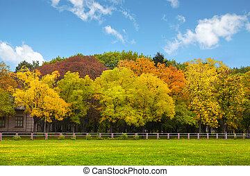 blå, höst, över, sky, träd