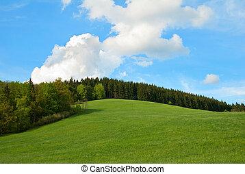 blå himmel, felt, grønnes høj, skov