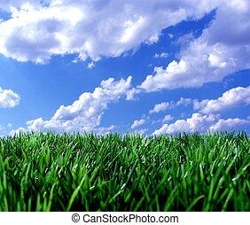 blå himmel, græs, grønne
