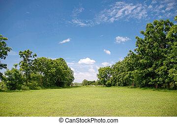 blå himmel, grøn eng